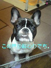 Konoyo